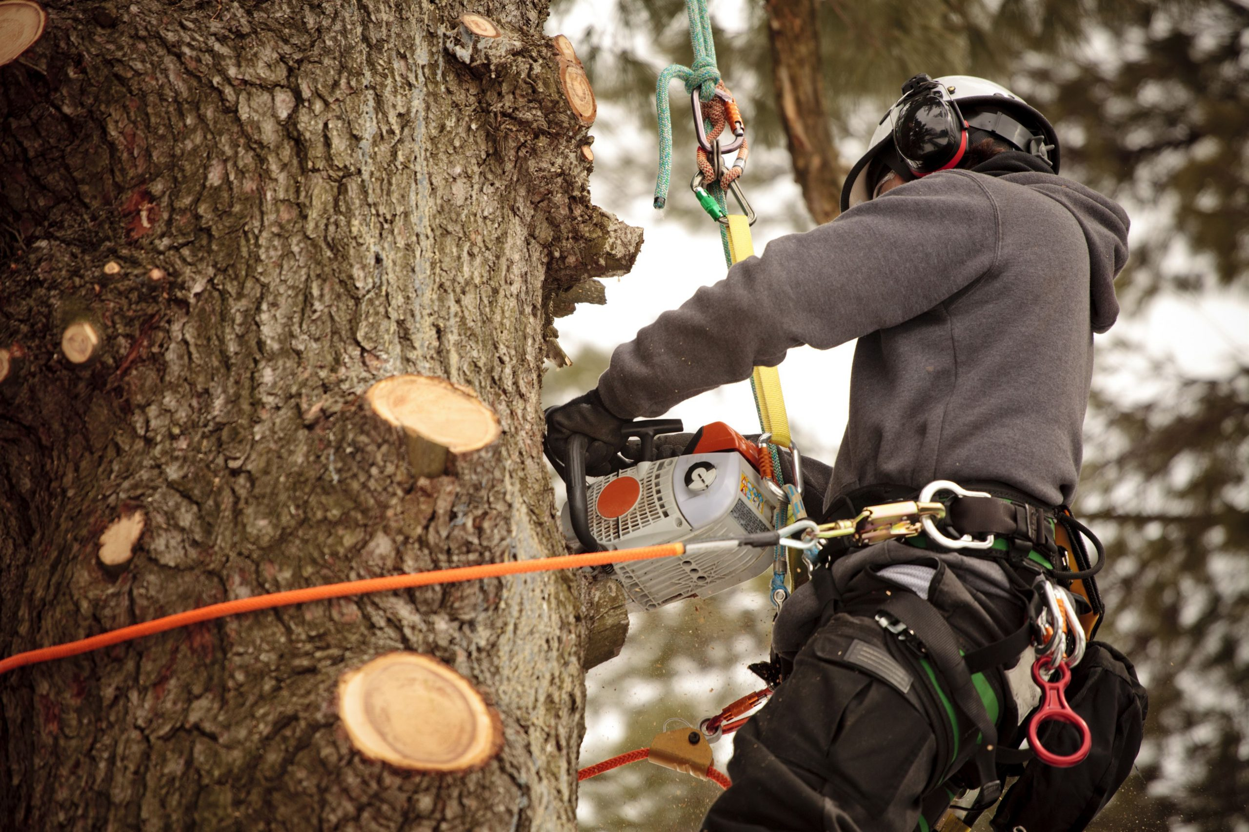 Arborist Insurance